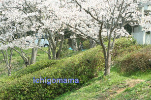 Photo_129